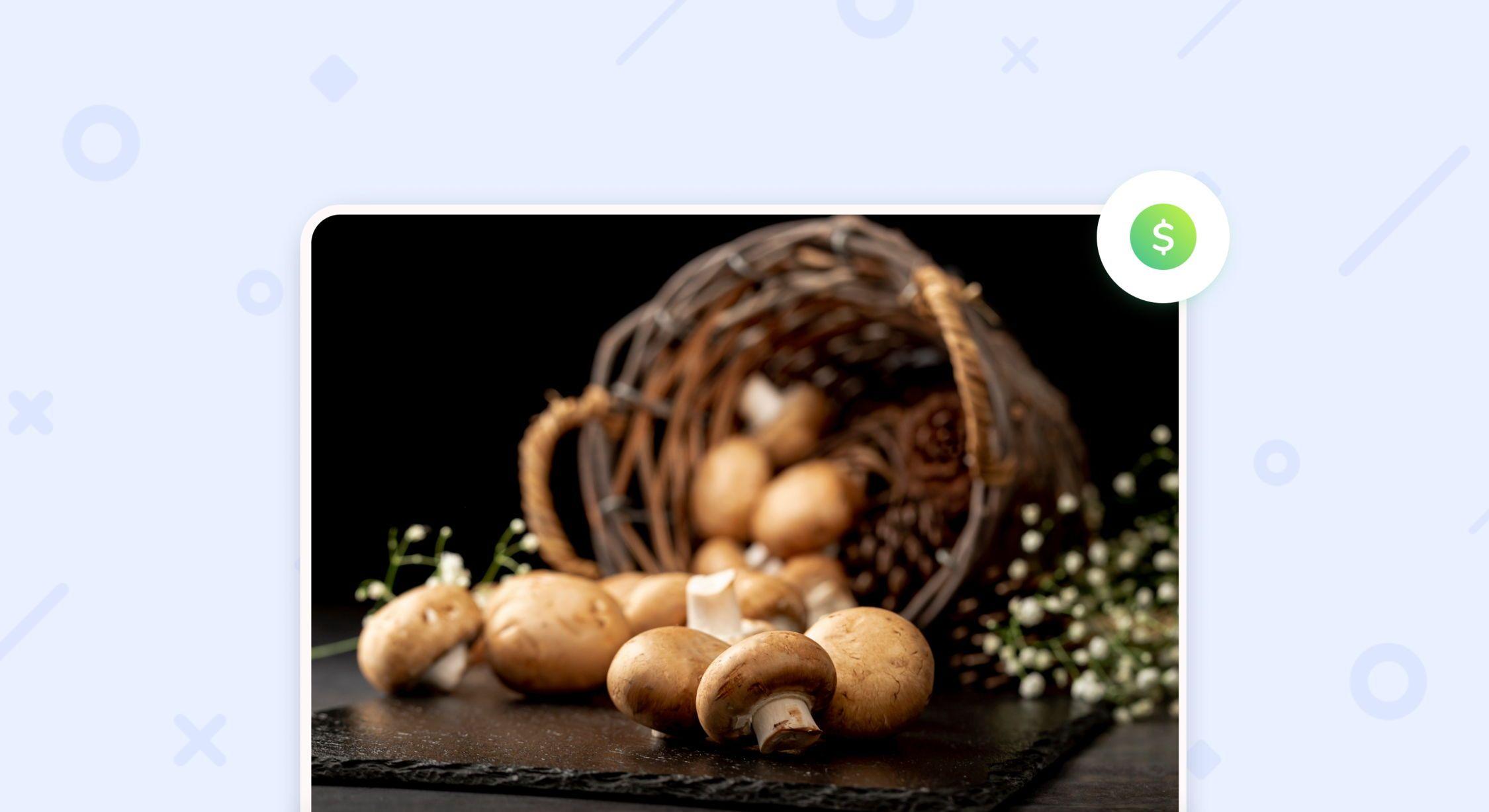 Выращивание грибов как бизнес: что нужно знать?